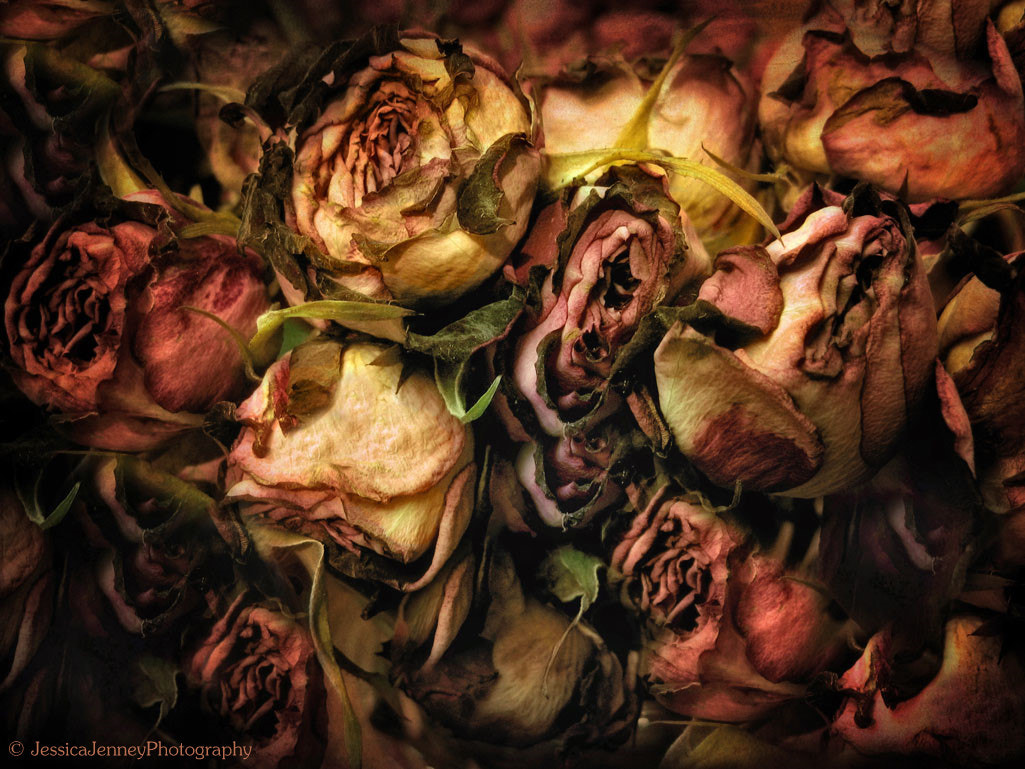 Photograph Past Their Prime by Jessica Jenney on 500px