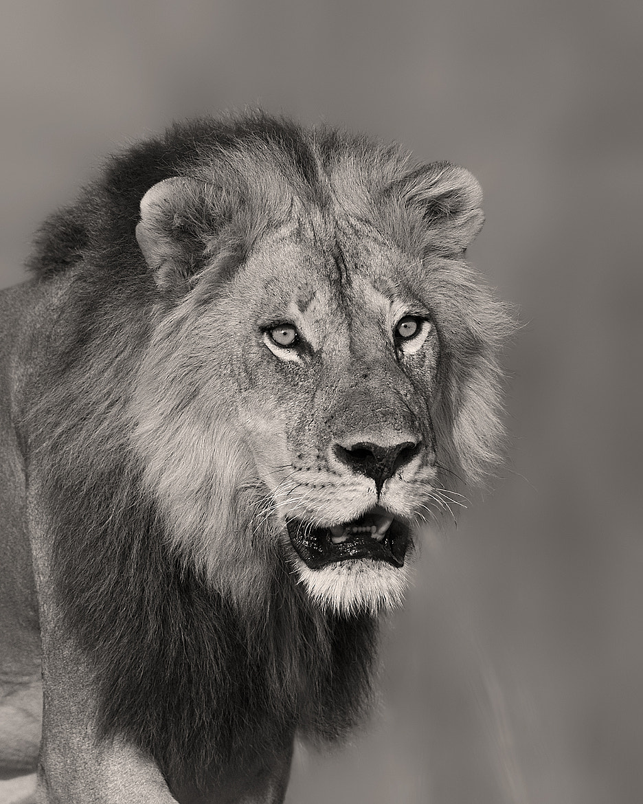 """Photograph """"Metro"""" in warm B&W by Marc MOL on 500px"""