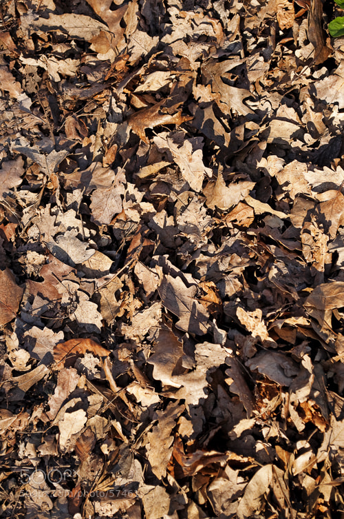 Photograph oak leaves by Anna Marinenko on 500px