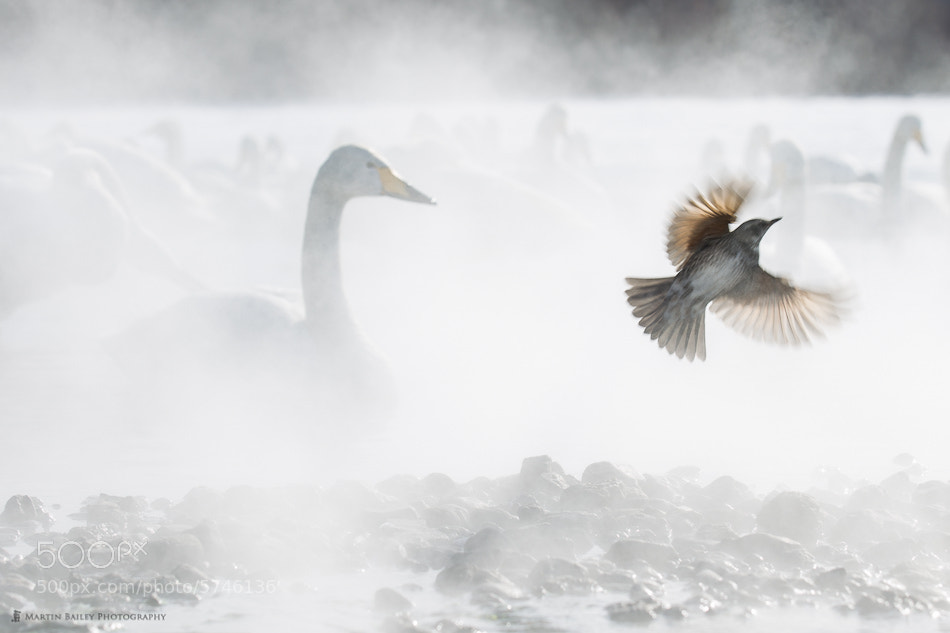 Photograph Fleeting Visit by Martin Bailey on 500px