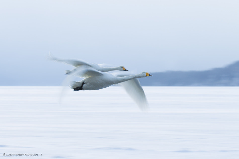 Photograph Frozen Lake Flight by Martin Bailey on 500px
