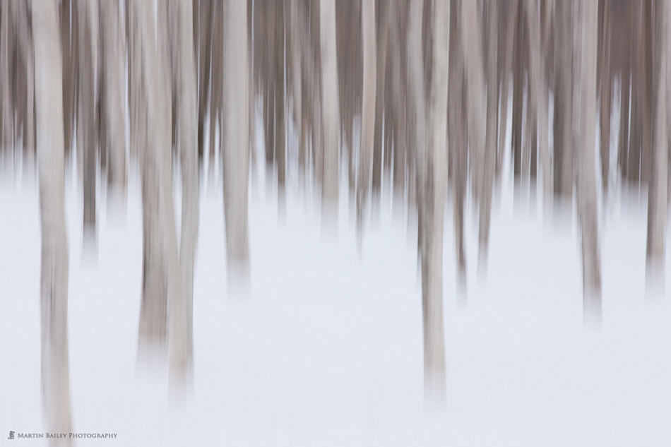Photograph Abstract Birch by Martin Bailey on 500px
