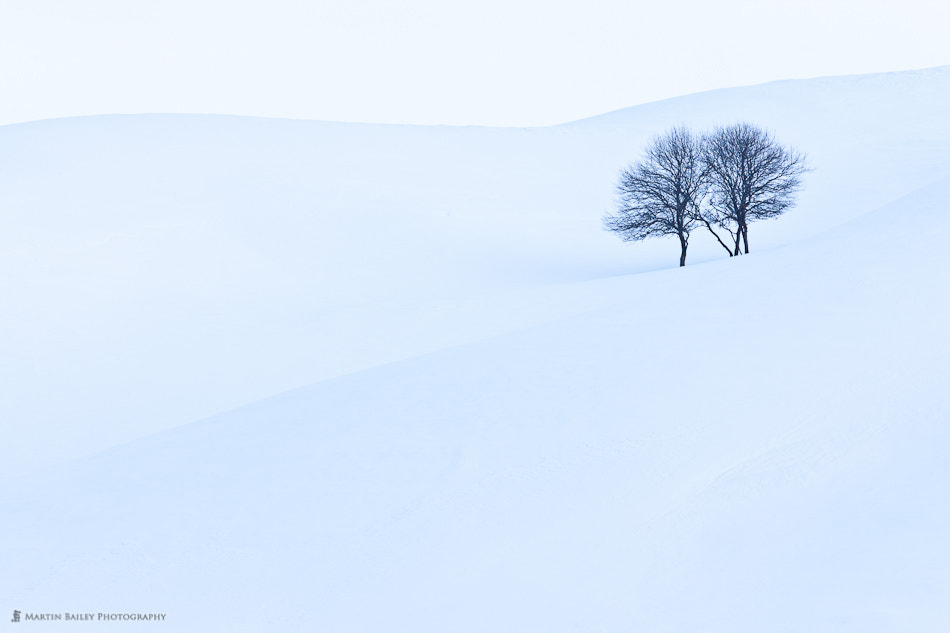 Photograph Apple Trees by Martin Bailey on 500px