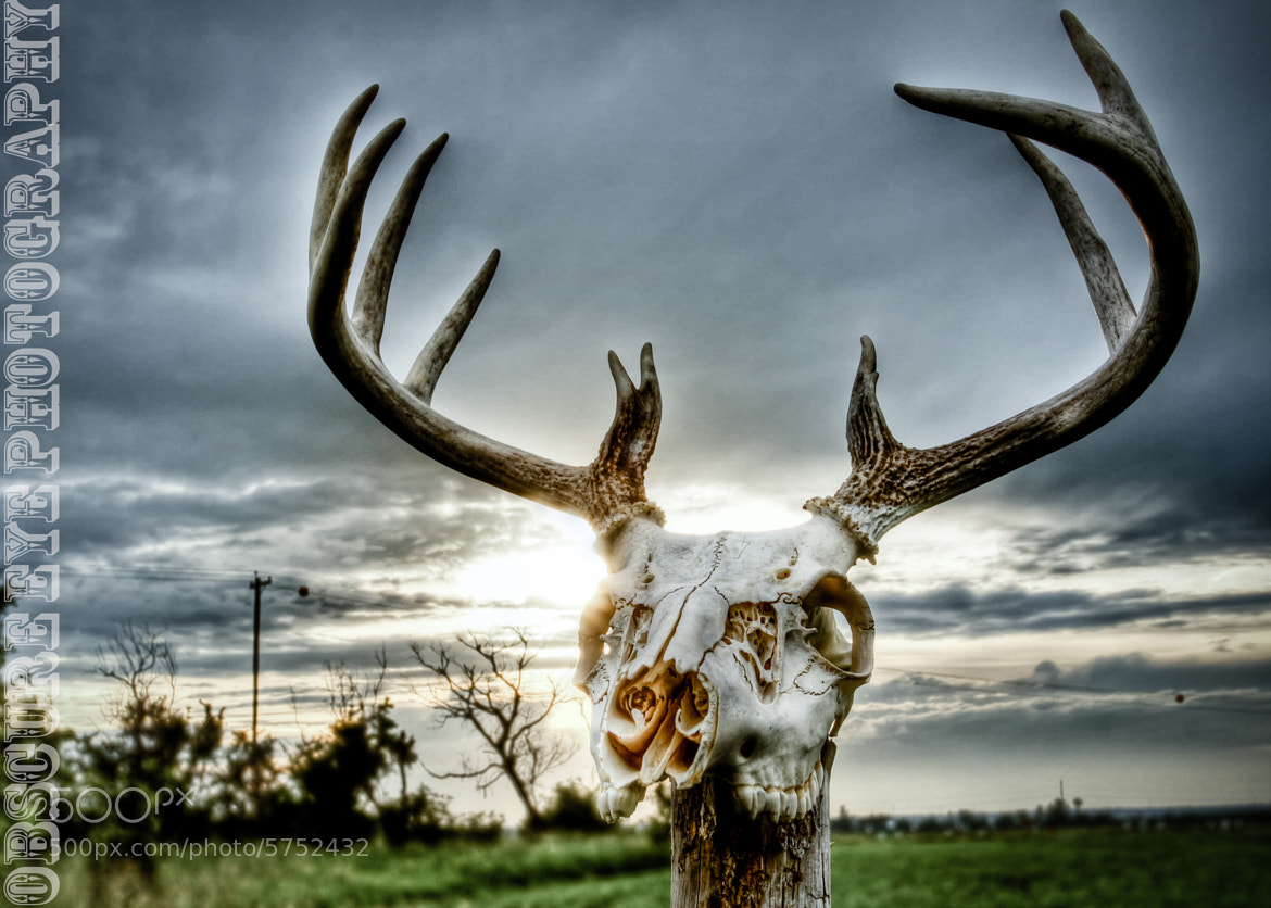 Photograph Deer Skull by Charles Finnie on 500px