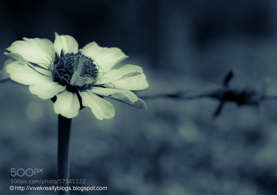 The flower and the barb by Vivek Pandey on 500px.com