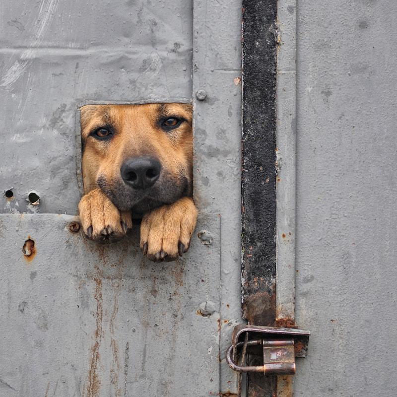 Benji's Window I by Noni Panayotov on 500px