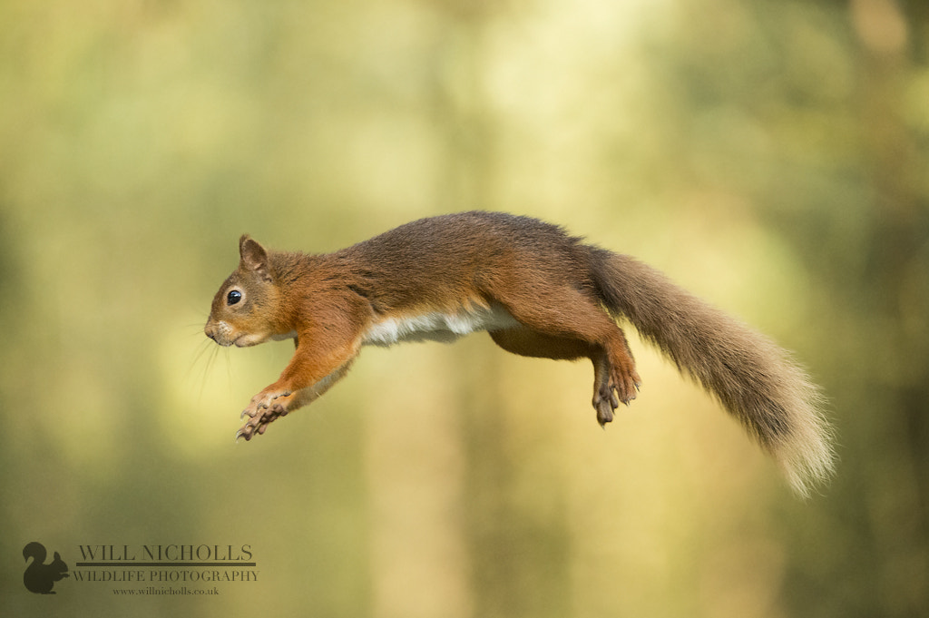 Photograph Up Up and Away! by Will Nicholls on 500px