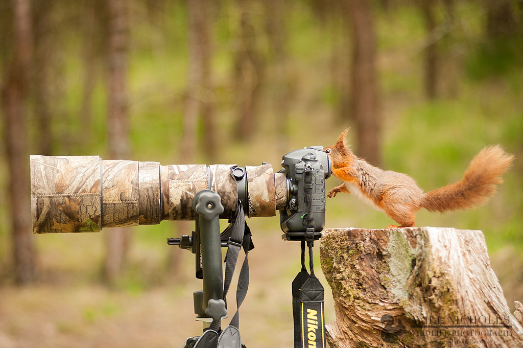 Photograph The Tables Have Turned by Will Nicholls on 500px