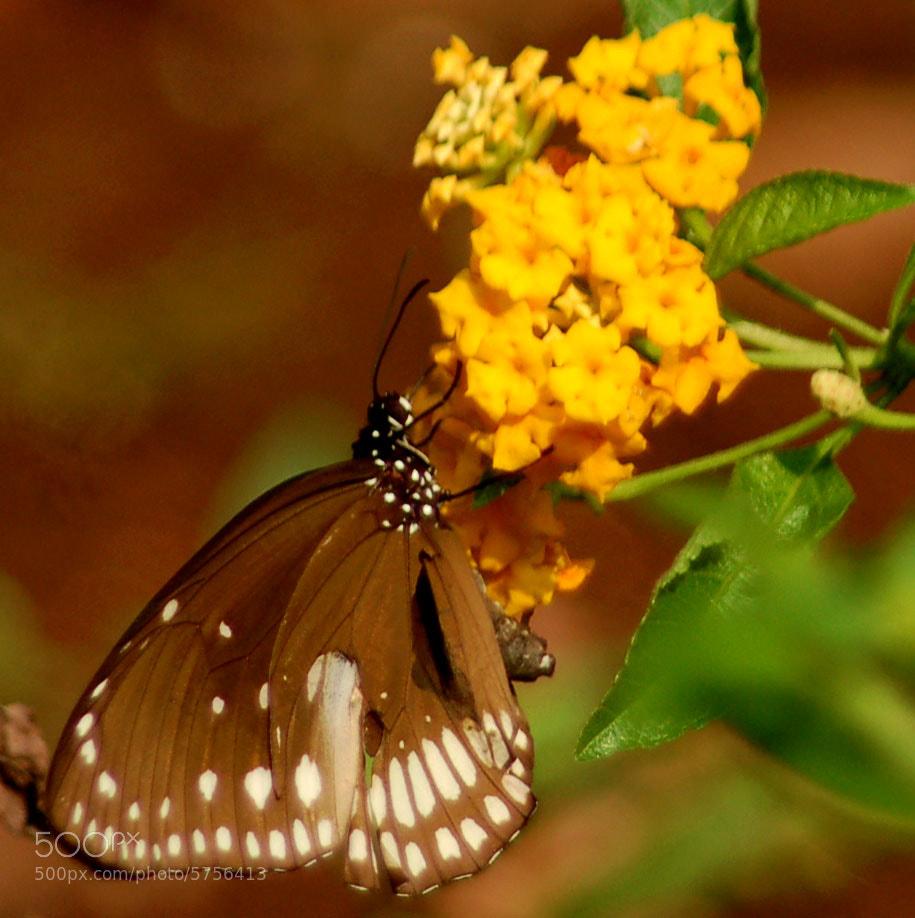 Photograph Untitled by Priya Ganadas on 500px