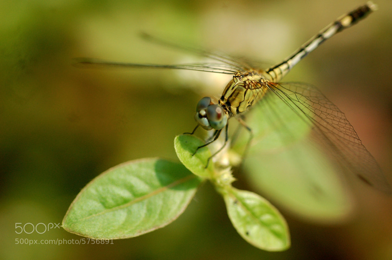 Photograph Ready to fly by Priya Ganadas on 500px