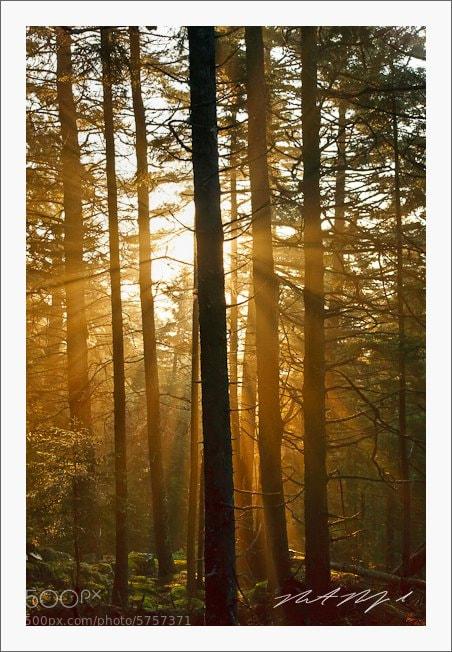 Photograph Lightburst, Acadia  by Robert Rodriguez Jr on 500px