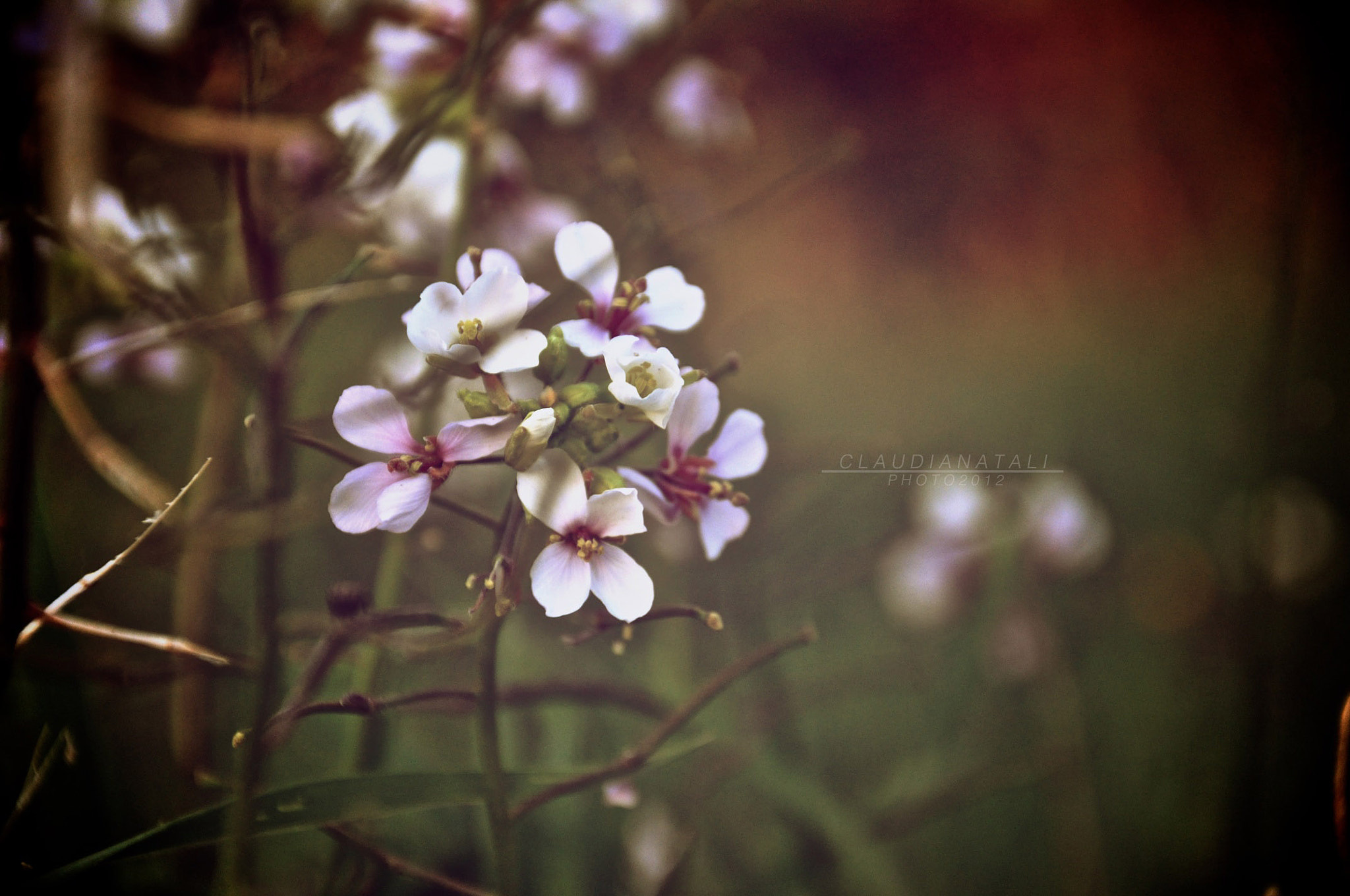 Photograph Vintage Flower by claudia natali on 500px