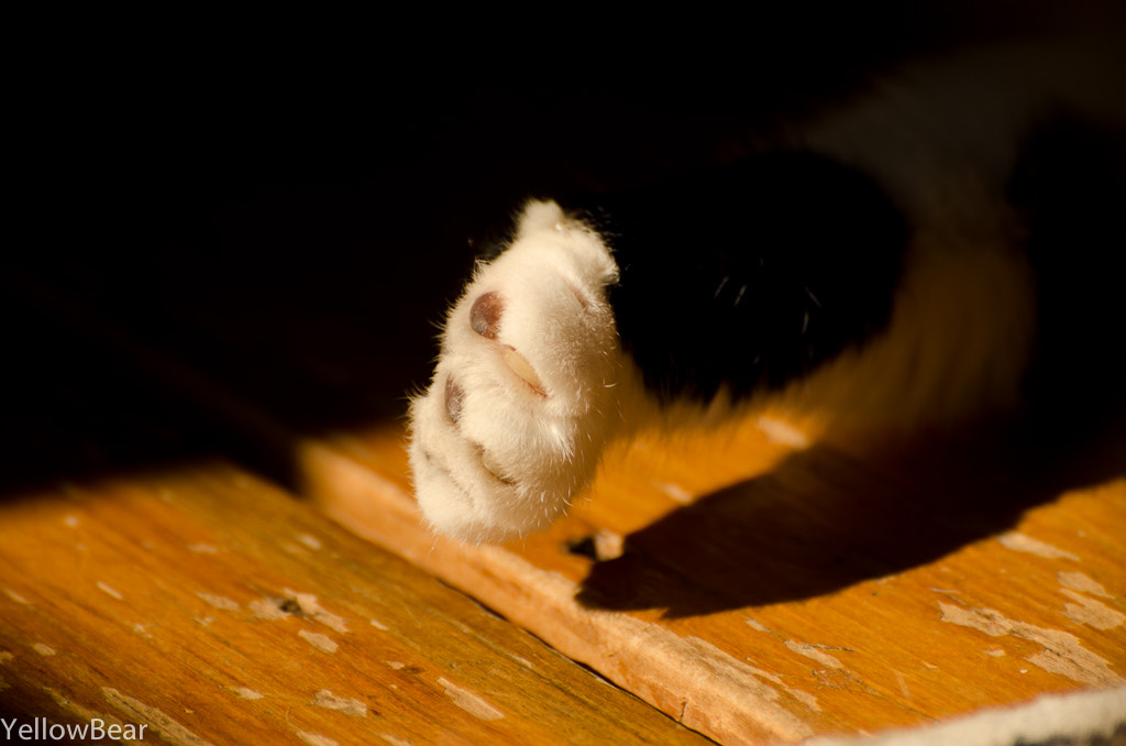 Photograph Give me some paw by Michael Hassey on 500px