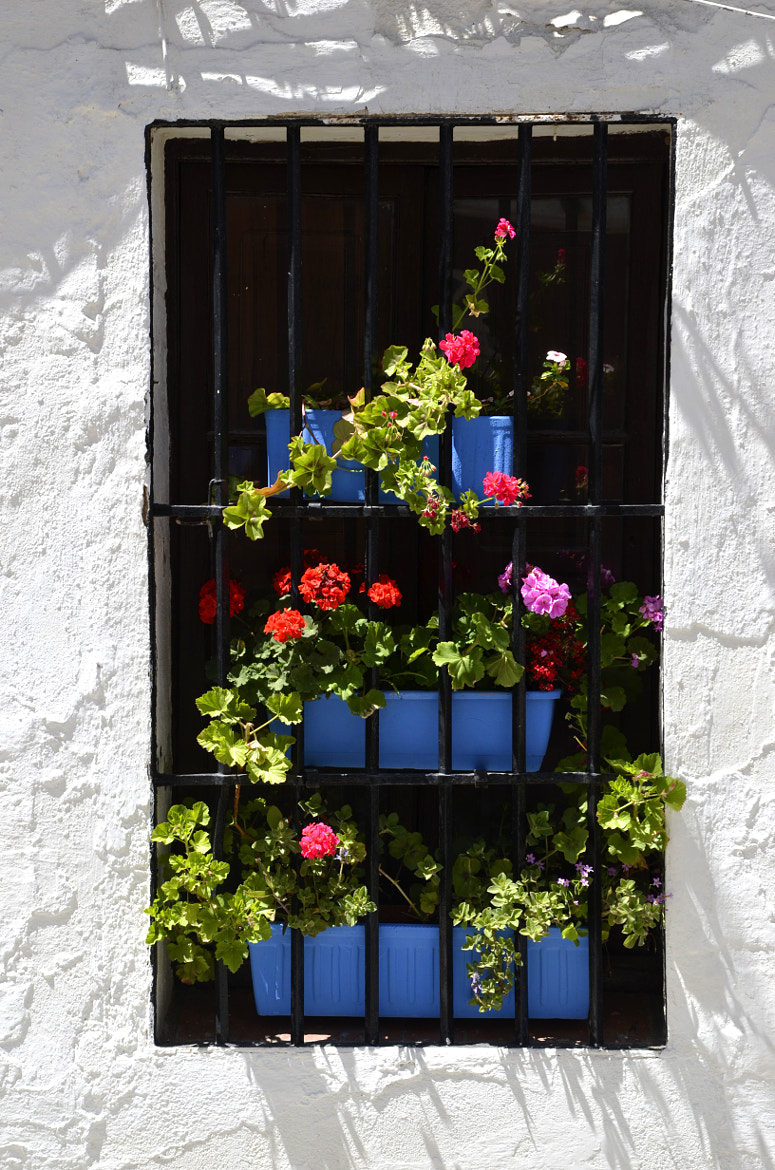 Photograph Window with flowers by Lorenzo Salas-Morera on 500px