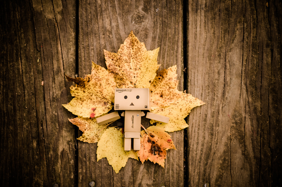 Fall's Amber