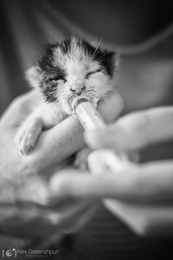 Photograph The Little Miracle by Alex Greenshpun on 500px