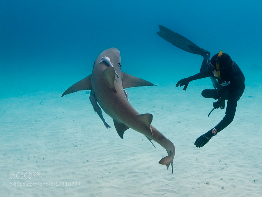 Photograph Dancing with a Lemon Shark by Boaz Meiri on 500px