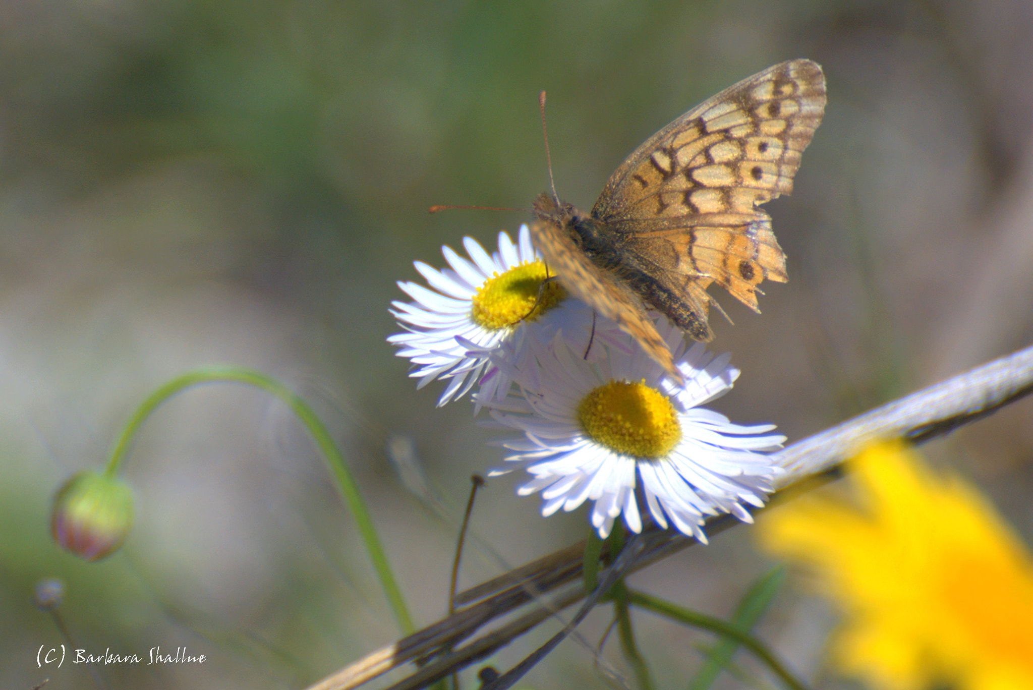 Photograph Spring in Texas by Barbara Shallue on 500px