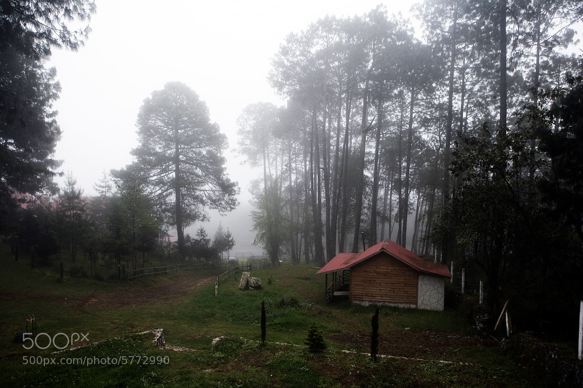 Photograph bosque de niebla by Cristobal Garciaferro Rubio on 500px