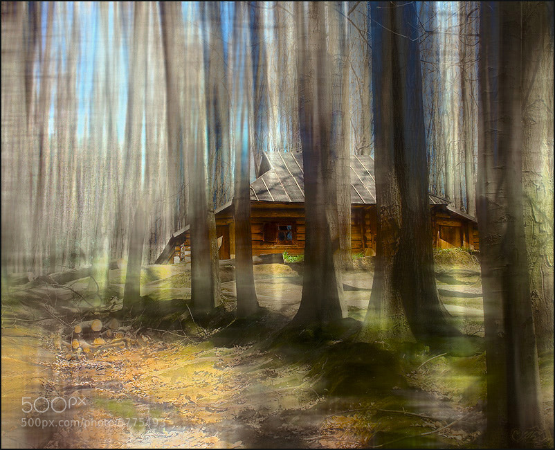 Photograph Spring forest by Alla  Lora on 500px
