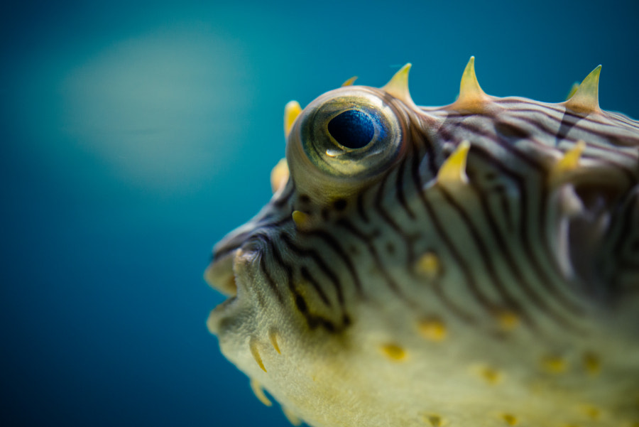 Photograph Puffer by Justin Mauldin on 500px