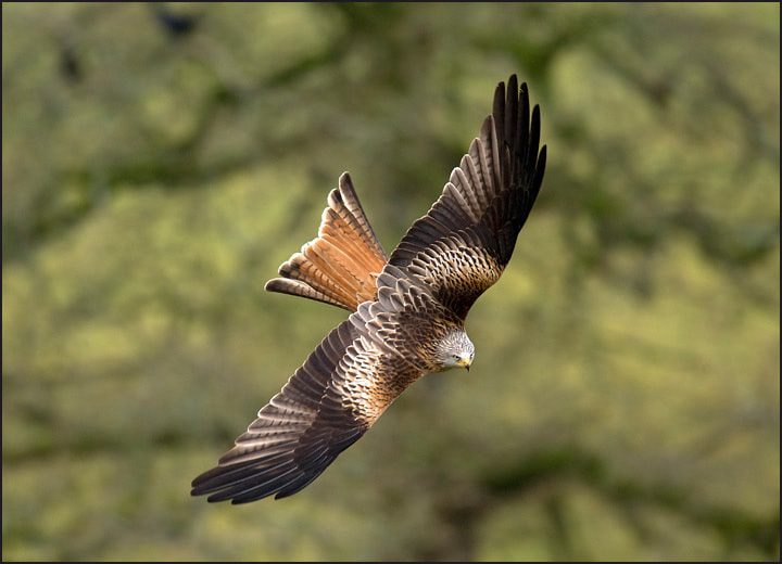 Photograph Swoop by Tony Flashman on 500px