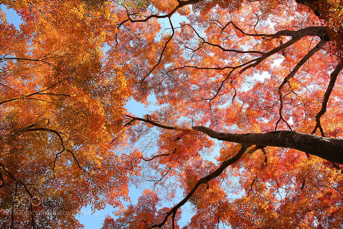 Photograph Automn colors by Laurent Thery on 500px