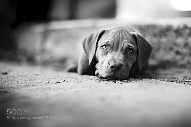 Photograph Our friend by Manuel Orero on 500px
