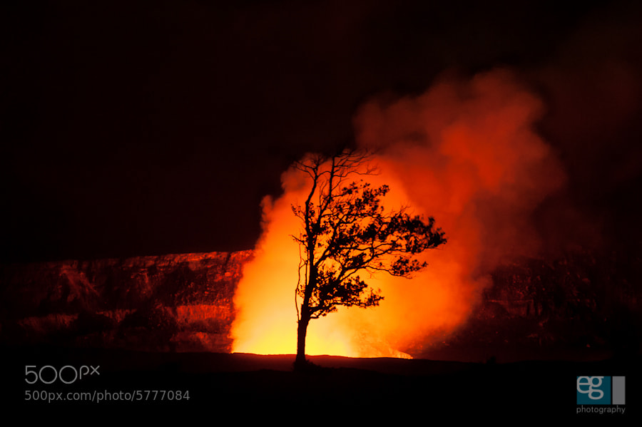 Photograph Tree of Fire by Ed Gately on 500px
