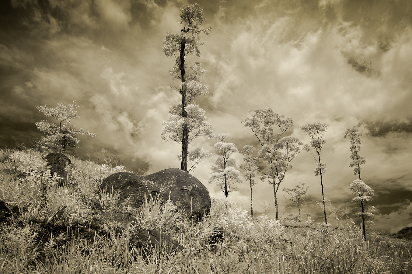 Photograph Treescape by Jon Bowles on 500px