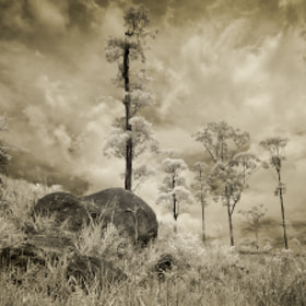 Treescape by Jon Bowles (aliengrove)) on 500px.com