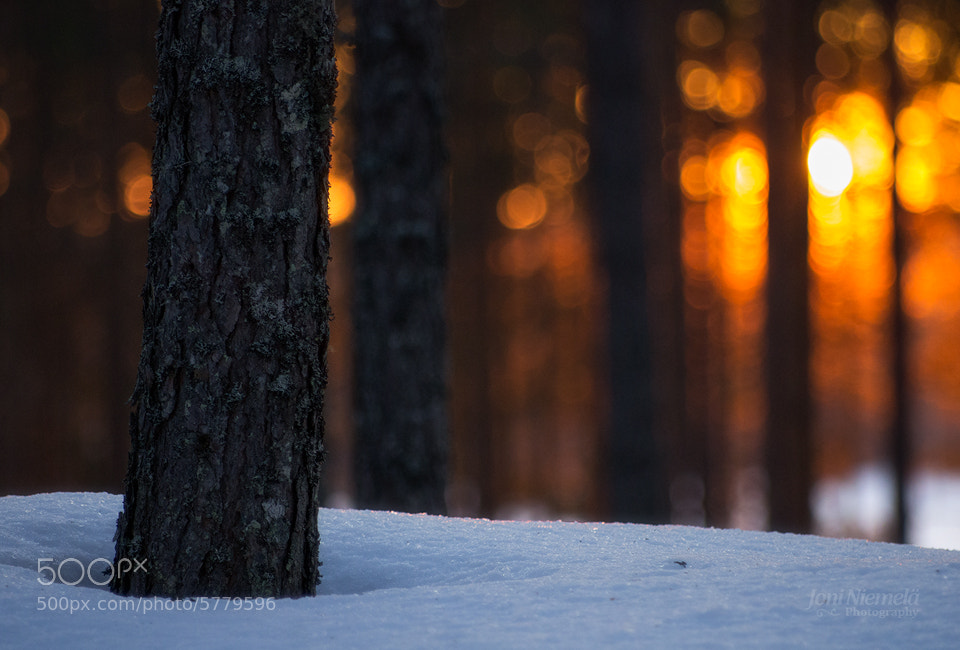 Photograph Dark Trees by Joni Niemelä on 500px