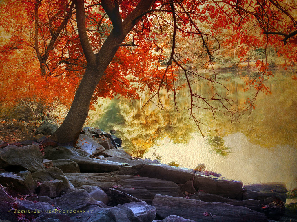 Photograph Under the Maple by Jessica Jenney on 500px
