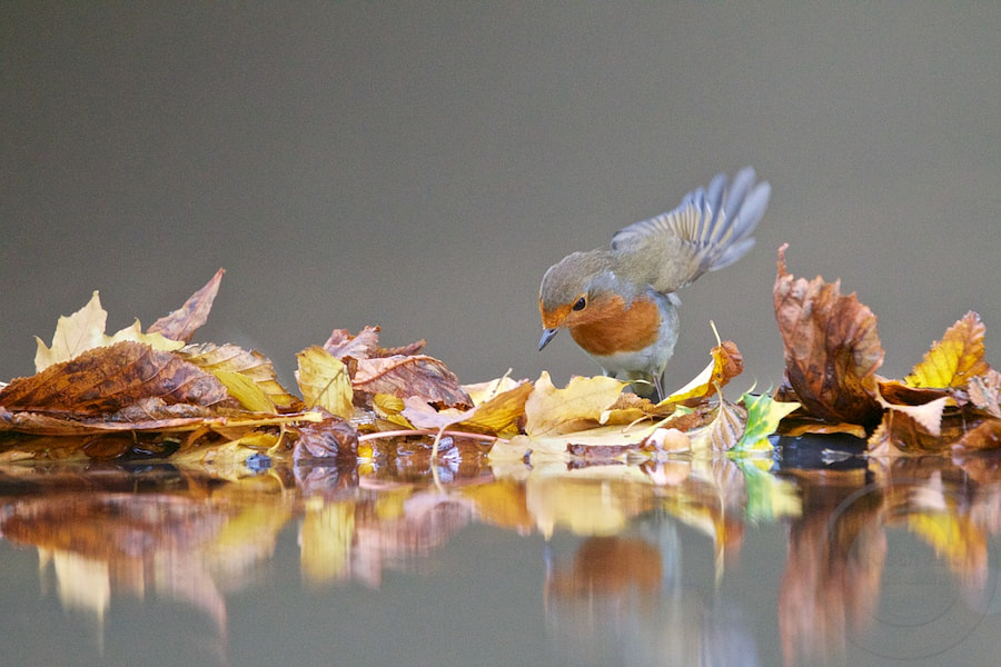 Food in the Leaves by Josh Anon on 500px.com