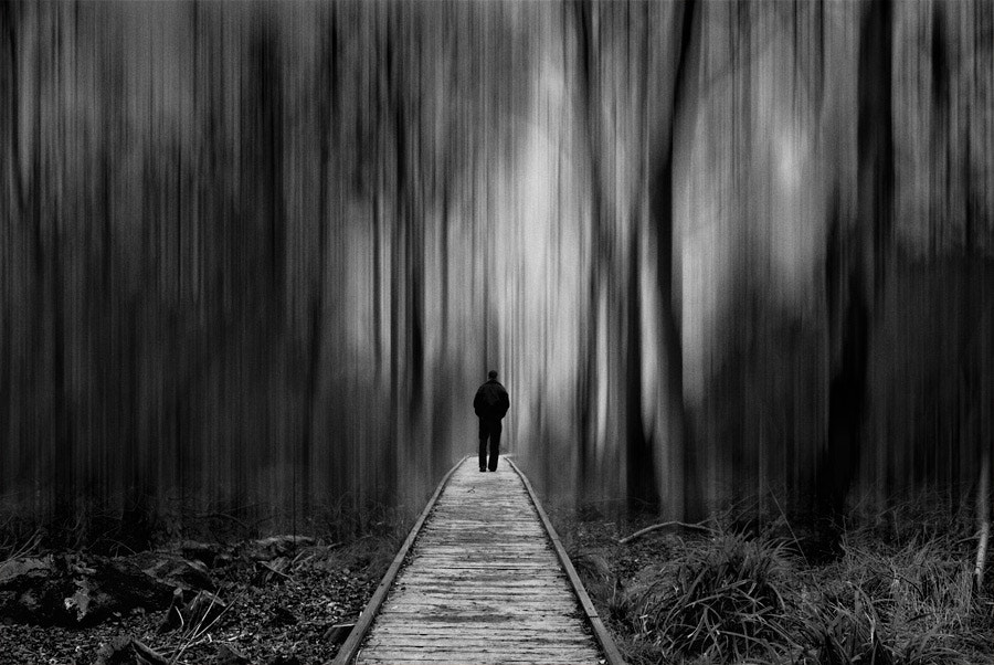 Photograph A Walk Through Dark Woods by Youcef Bendraou on 500px