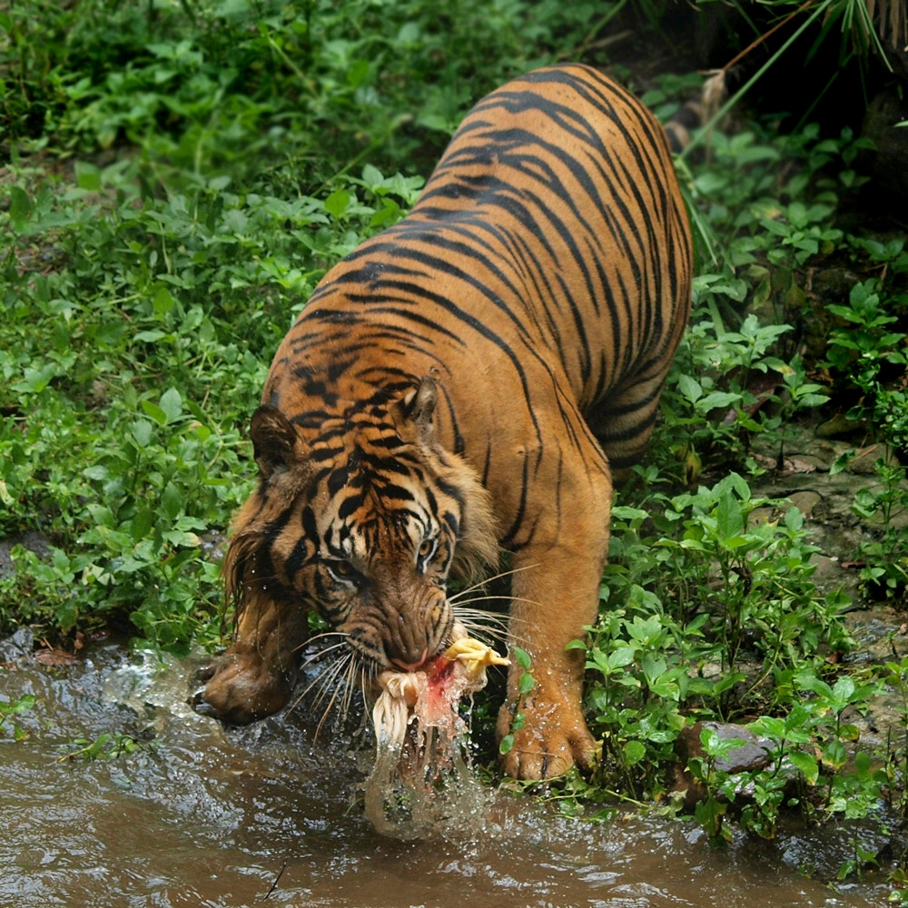Photograph this is my food ! by Irawan Subingar on 500px