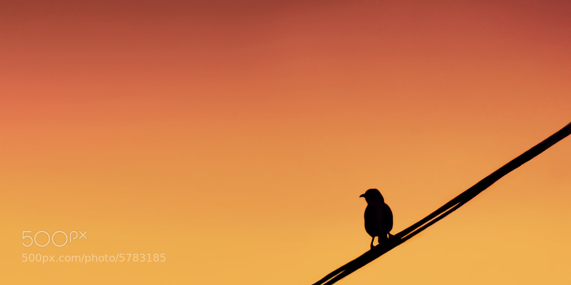 Photograph The Lonely Bird by Anand Gopakumar on 500px