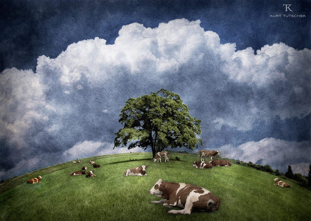 Photograph Lonely tree and some cows by kurt tutschek on 500px