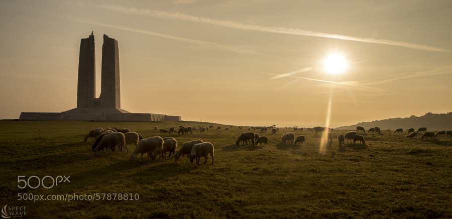 Vimy and sheep by Melvin Liss on 500px.com
