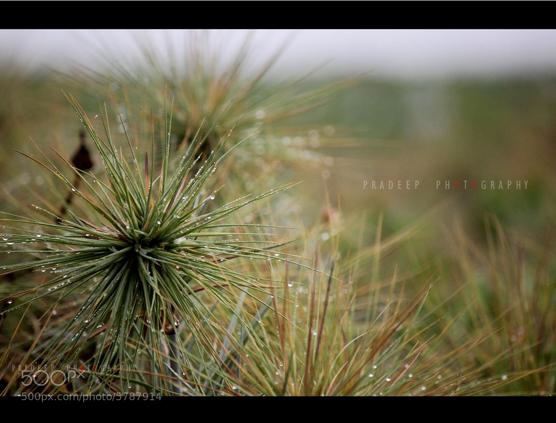 Photograph Floraas by Pradeep virags on 500px