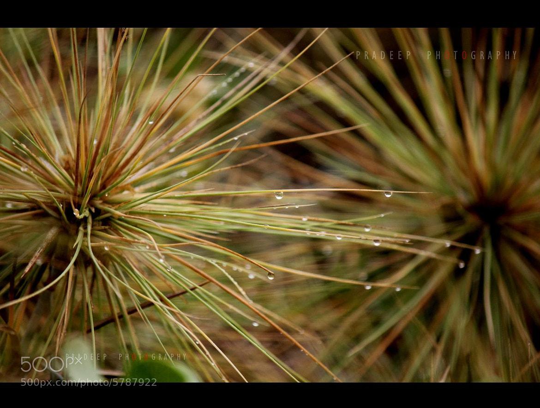 Photograph Florass  by Pradeep virags on 500px