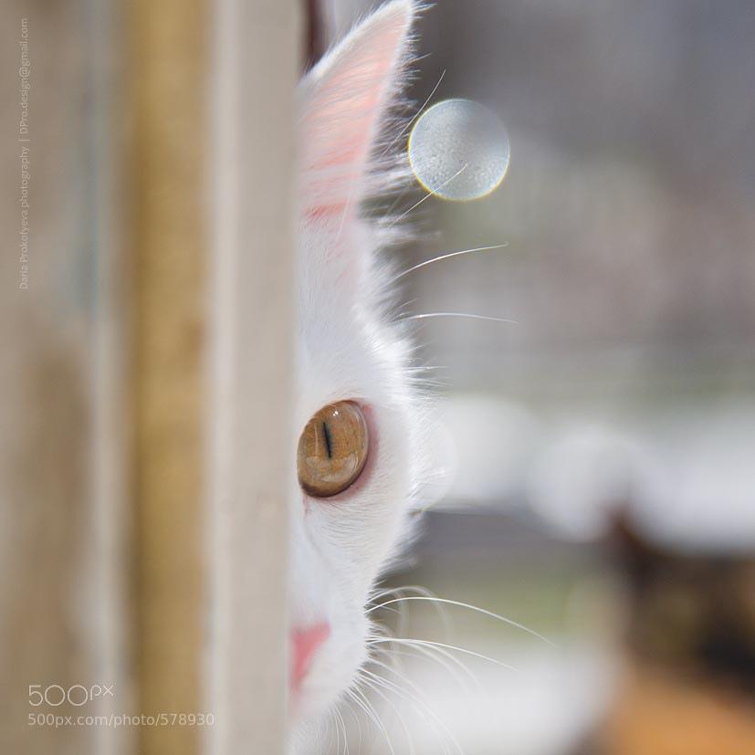 Photograph Tension by Daria Prokofyeva