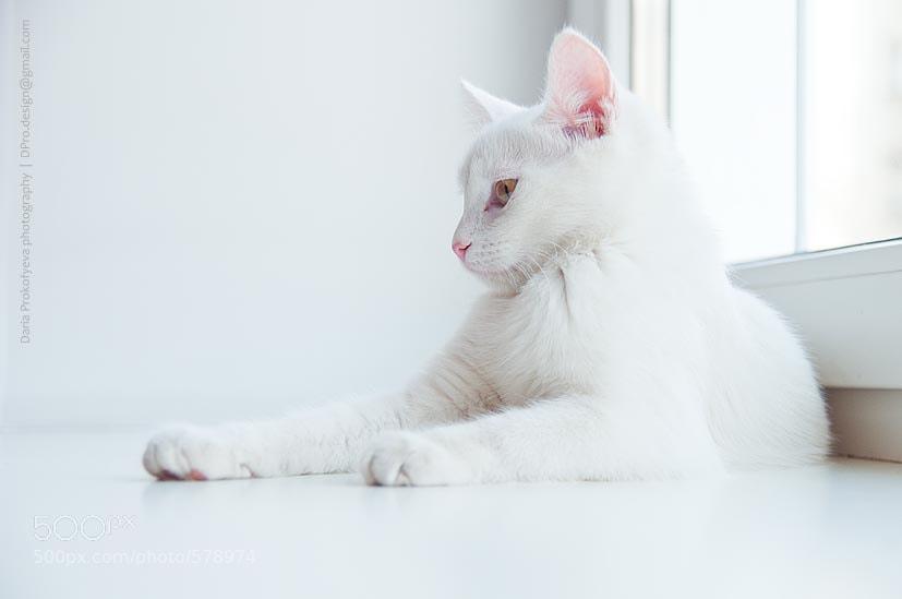 White Royalty by Daria Prokofyeva