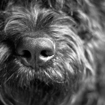 Nosey Animal