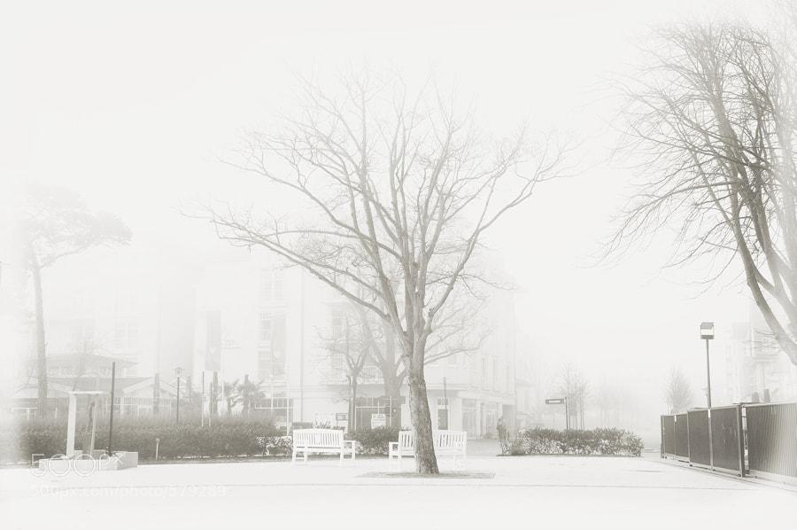 Photograph foggy by Frau Zausel on 500px
