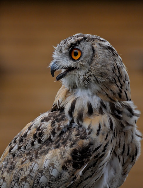 Photograph Eagle Owl by Martin Pettitt on 500px