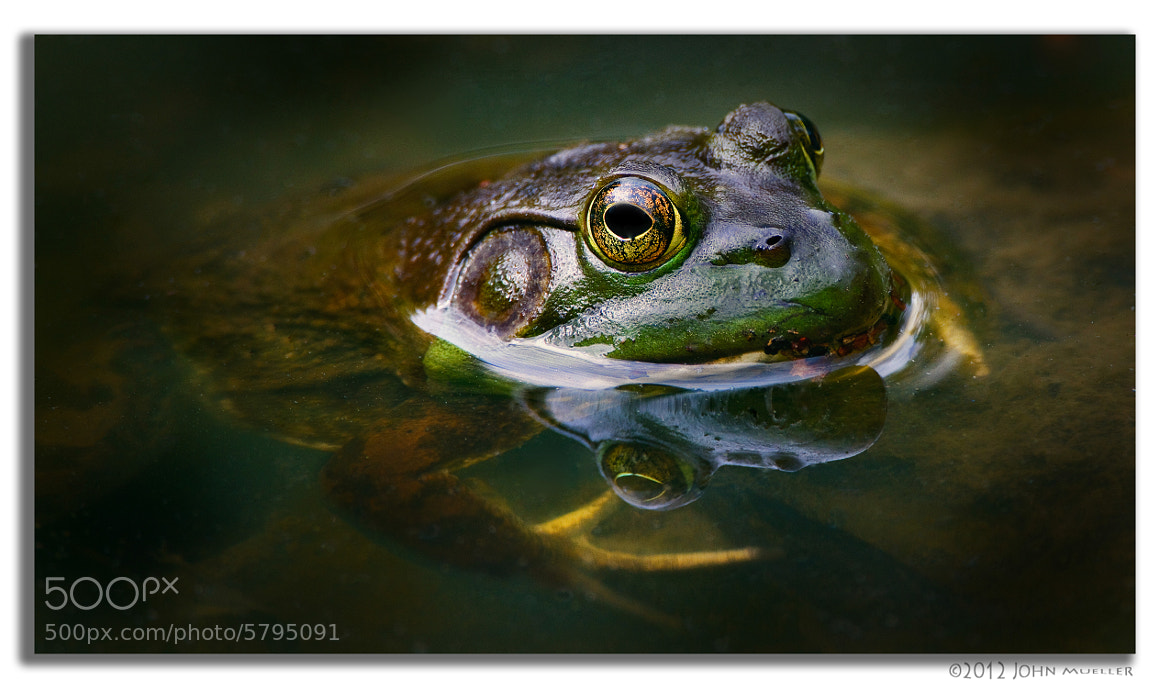 Photograph Frog Photo by Eos Müller on 500px