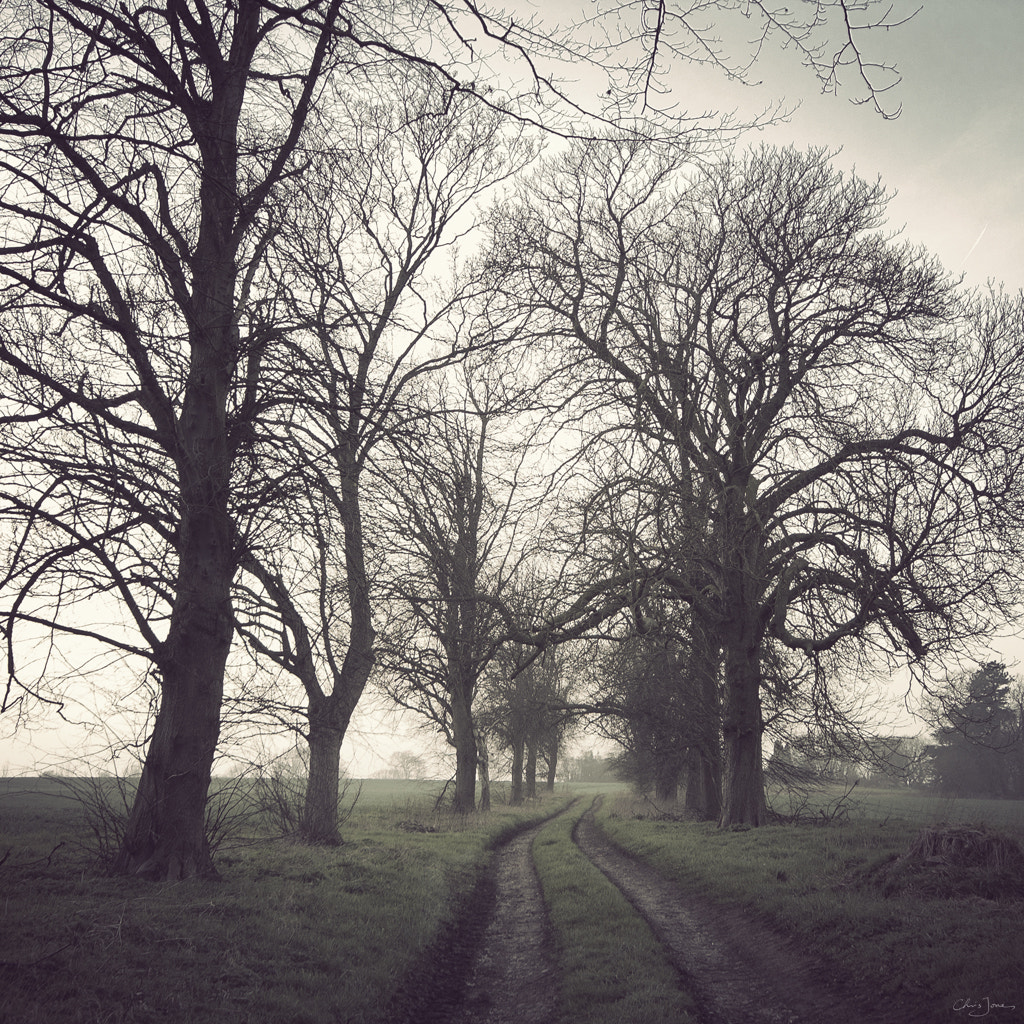 Photograph Avenue of trees by Chris Jones on 500px