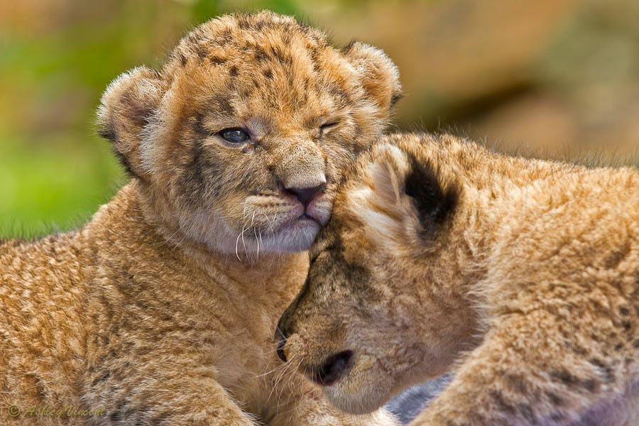 Photograph Minor Collision by Ashley Vincent on 500px