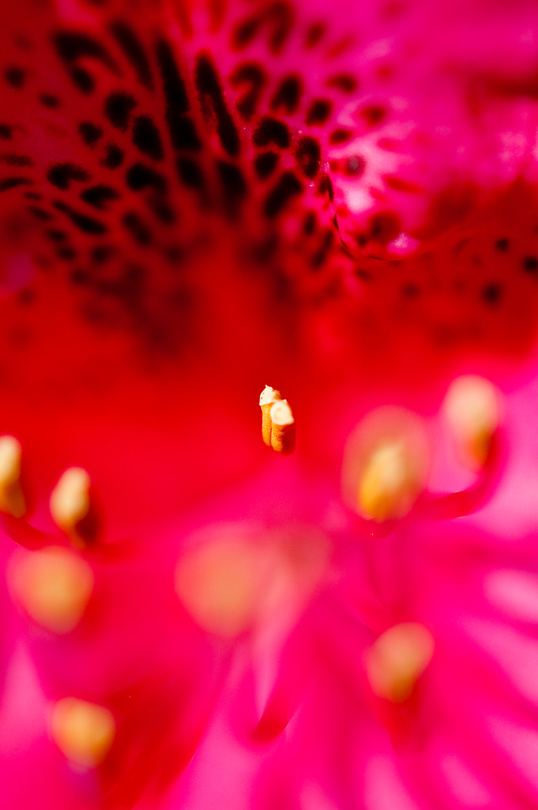 Photograph Stamen by Tom Tolkien on 500px